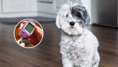 Pet Diabetes Month