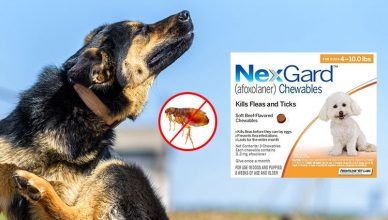Nexgard – The Ultimate Treatment for your pet