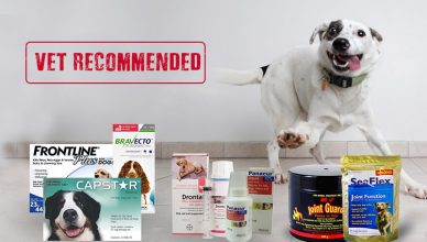 Vet Recommended Pet Supplies for Dogs