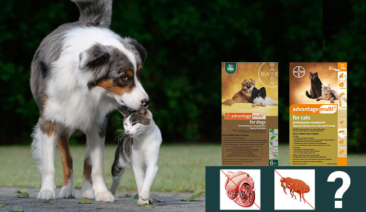 Advantage Multi (Advocate) an effective treatment for Heartworms & Fleas