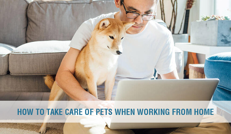 How to Take Care of Pets When Working From Home