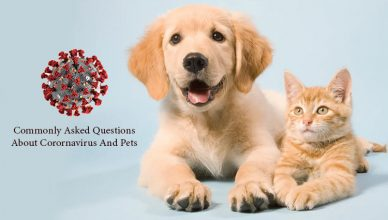 Commonly Asked Questions About Corornavirus And Pets