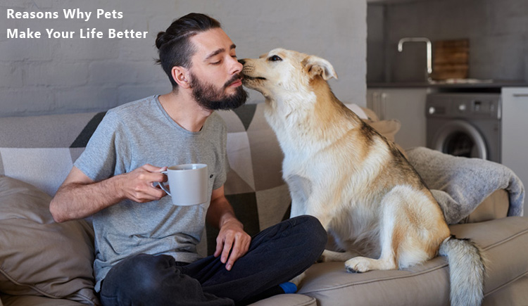Reasons Why Pets Make Your Life Better