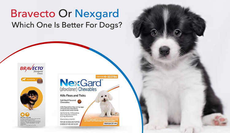 Bravecto Or Nexgard: Which One Is Better For Dogs?