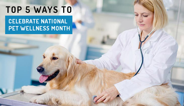 Top Five Ways to Celebrate National Pet Wellness Month