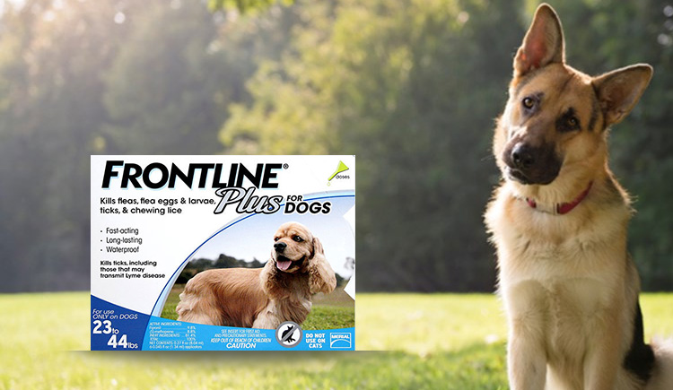 All You Need To Know About Frontline Plus For Dogs