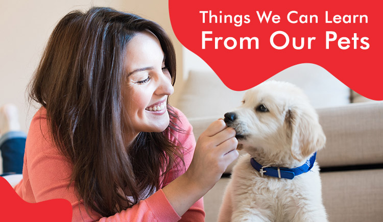 Things We Can Learn From Our Pets