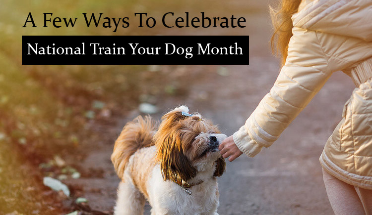 A Few Ways To Celebrate National Train Your Dog Month