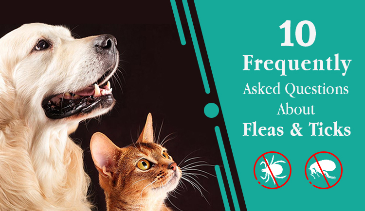 10 Frequently Asked Questions About Fleas & Ticks