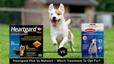 Heartgard Plus Vs Nuheart – Which Treatment To Opt For?