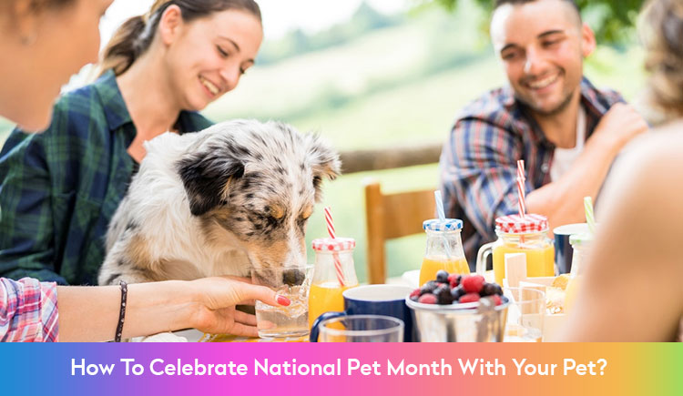How to celebrate National Pet Month With Your Pet