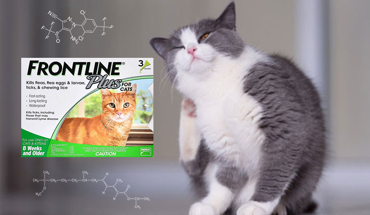 How Does Frontline Plus For Cats Work