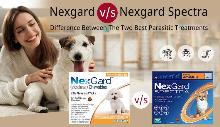 Nexgard v/s Nexgard Spectra-Difference between the Two Best Parasitic Treatments