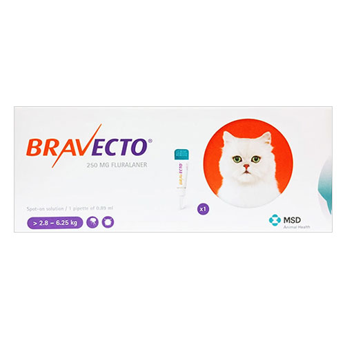 Bravecto Spot On for Medium Cats 6.2 lbs - 13.8 lbs (Orange) 1 Pack