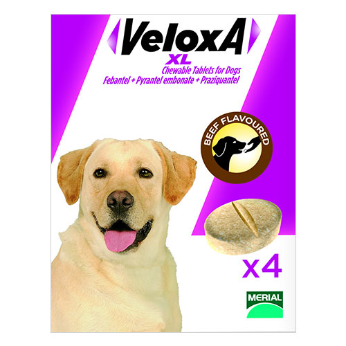 Veloxa Chewable Tablets XL for Large Dogs 4 Tablet